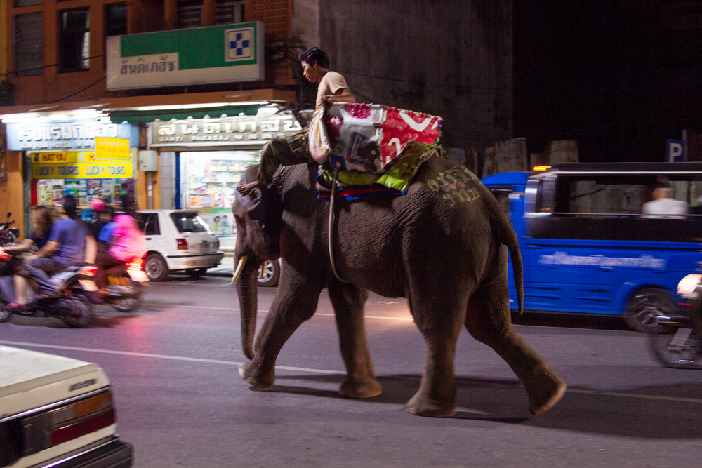 Elephant walking through the streets of Hatyai, Thailand.
