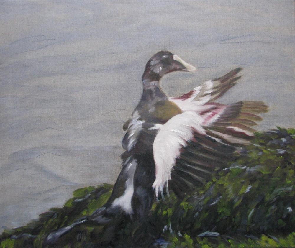 Sea Duck - 24x24