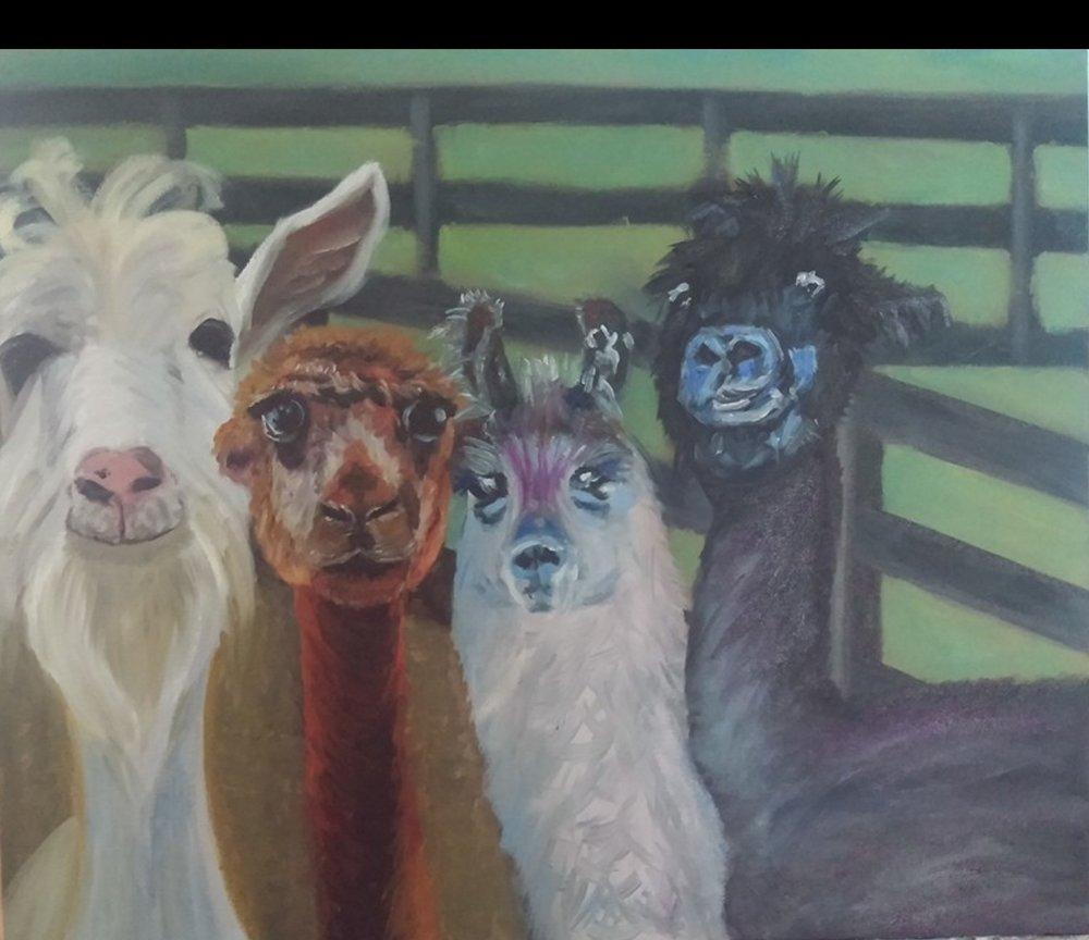 Four Llamas - 24 X 30