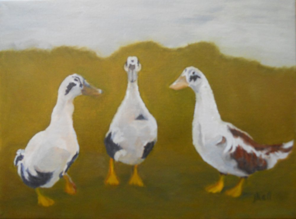 Cow Ducks - 9 X 11