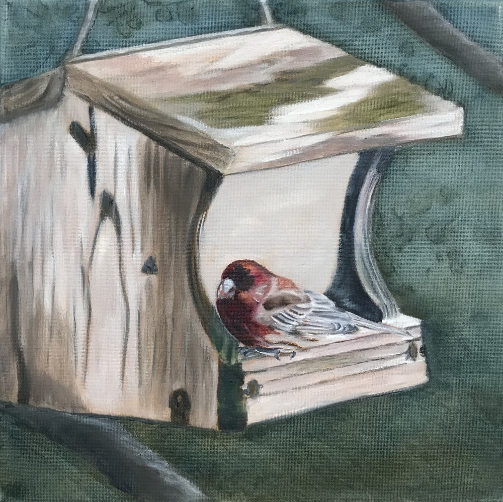 House Finch 12 X 12