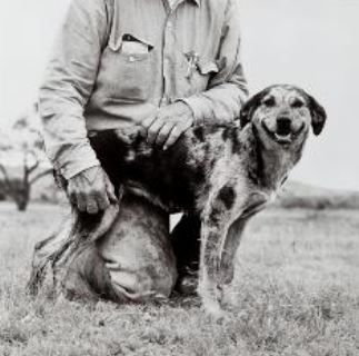 Image: Laura Wilson_Cattle dog Mookie1