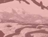 Image Credit:Ansel Adams (American, 1902–1984), Jeffrey Pine, 1902-1984, gelatin silver print laid down to mount, 9-1/4 × 7-3/16 in.