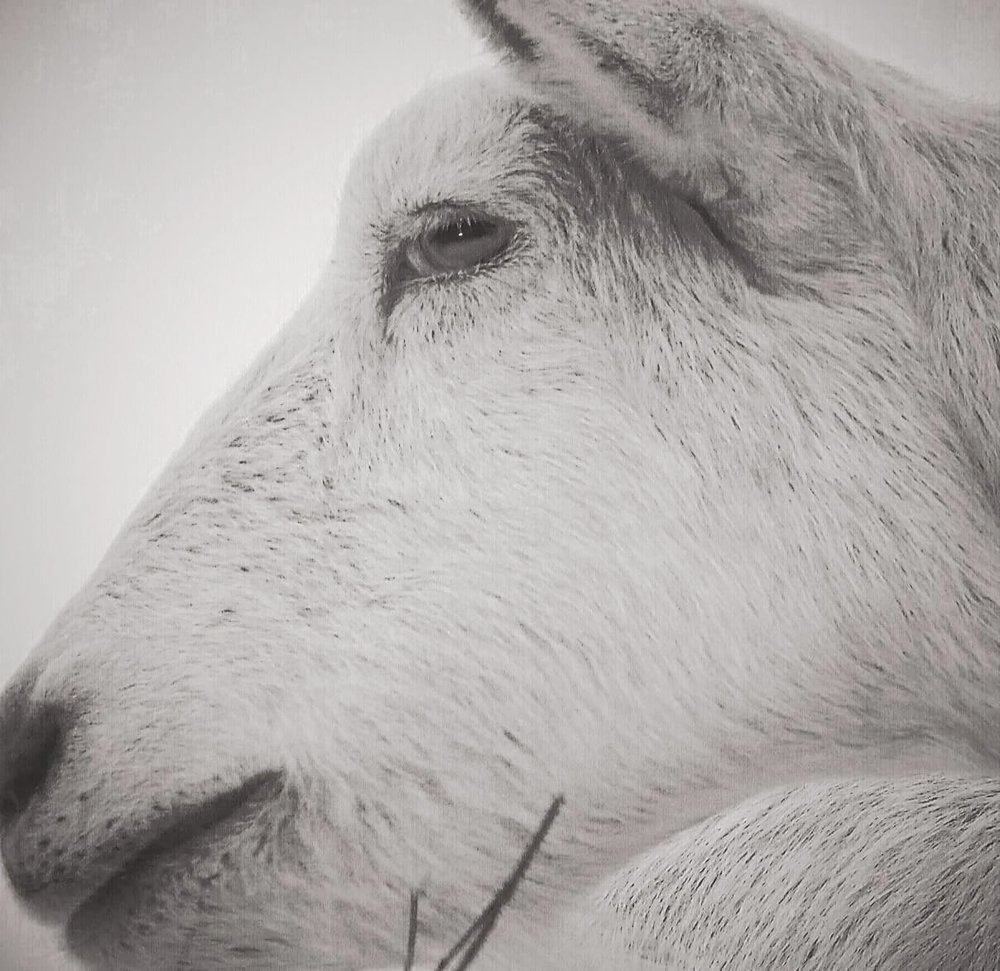 {Animals}