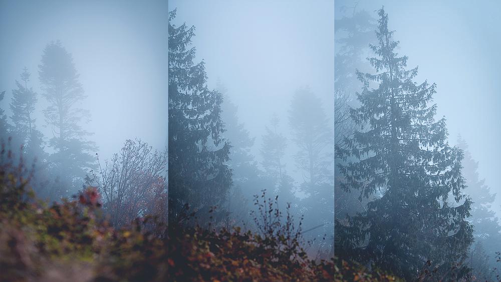 trees_wall_web.jpg