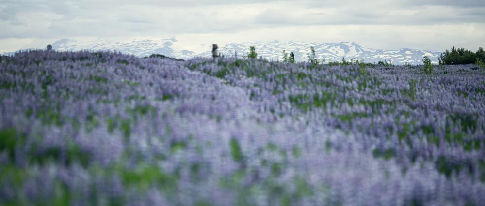 iceland_travel_reykjavik-9.jpg