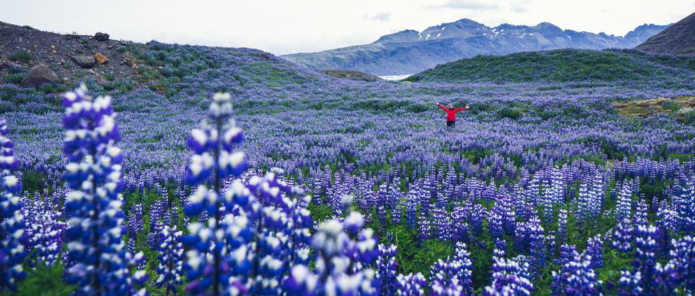 iceland_travel_reykjavik-48.jpg