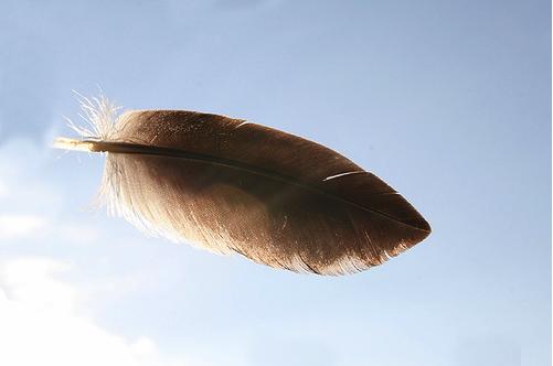 wildorcaimages-via-flickr