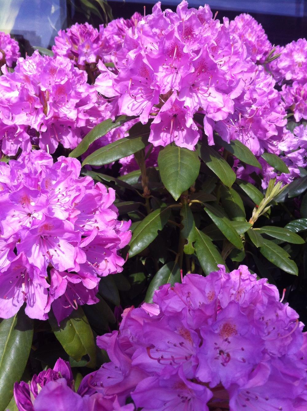 purple flower.jpg