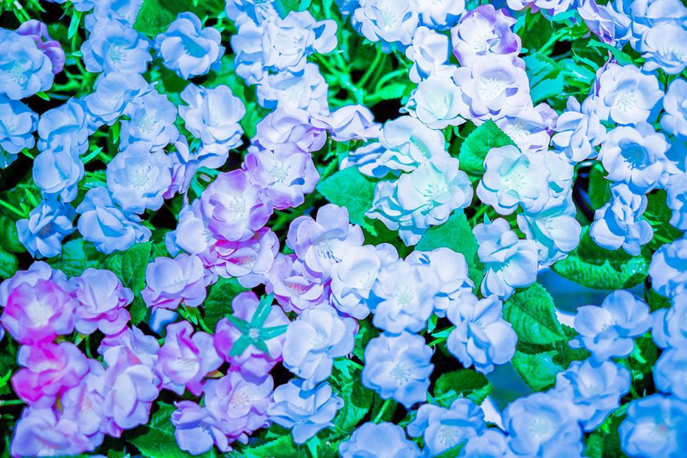 Garden II, 2014, Ella Ordona