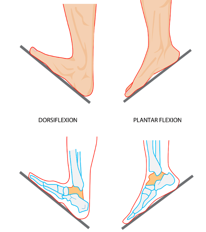 Calf Muscle Tightness, Achilles Tendon Length and Lower Leg Injury ...