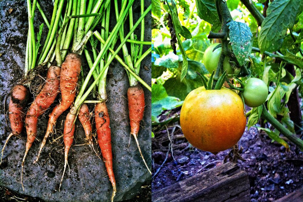 carrots_jfp1078.jpg