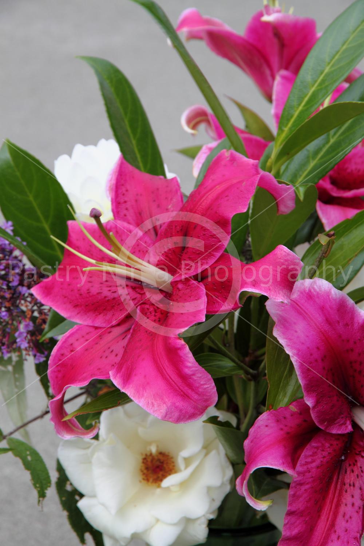 lillies1.jpg