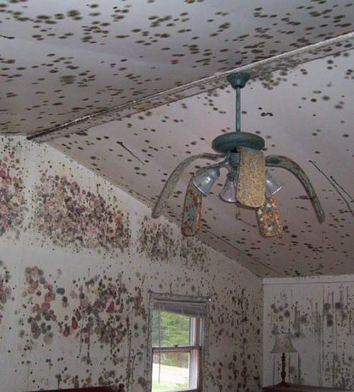 Bedroom-Fan-Mold-web.jpg