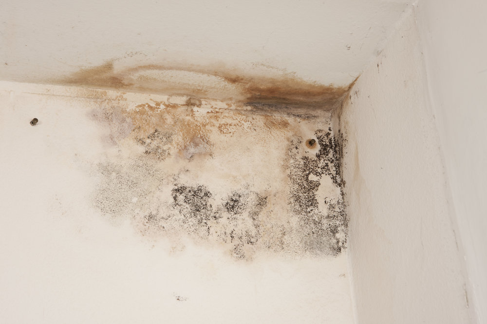 Certified WSF_How to Prevent Mold in Your Home_IMAGE.jpeg