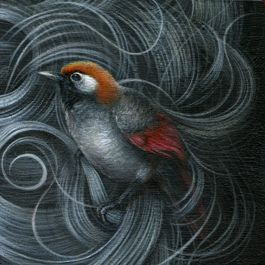 "Red-Tailed Laughing Thrush acrylic on cradled wood panel 6"" X 6"" X 1.5"" $450 SOLD"
