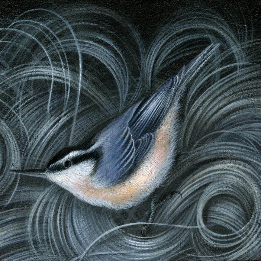"Nuthatch acrylic on cradled wood panel 6"" X 6"" X 1.5"" $450 SOLD"