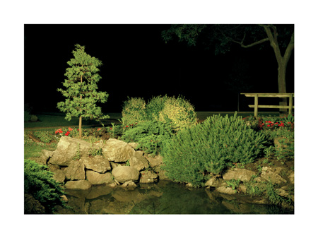 pond#2.jpg