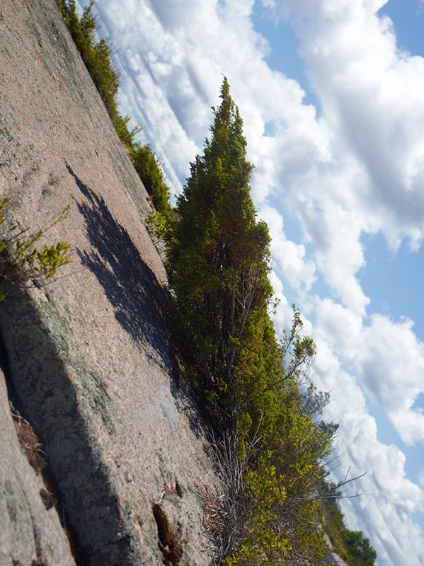 Tree Correction #5