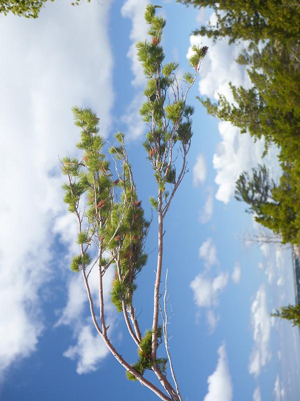 Tree Correction #10