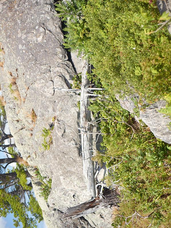 Tree Correction #12