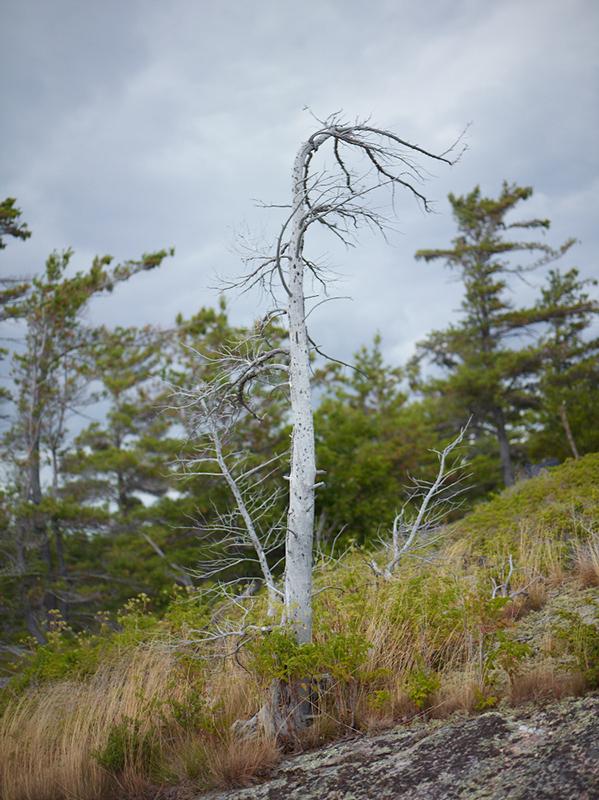 Tree Correction #17