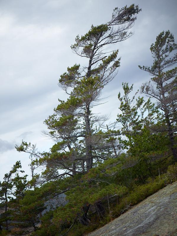 Tree Correction #18