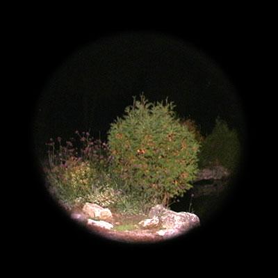 bush-loc#5.jpg