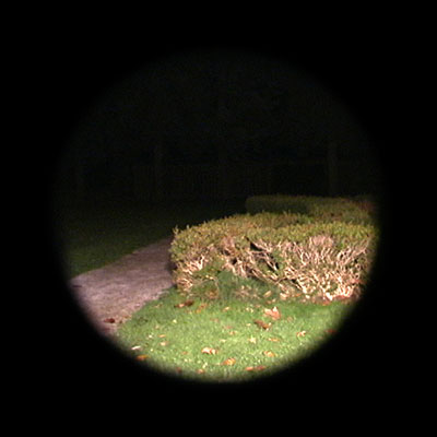 hedge-loc#9.jpg