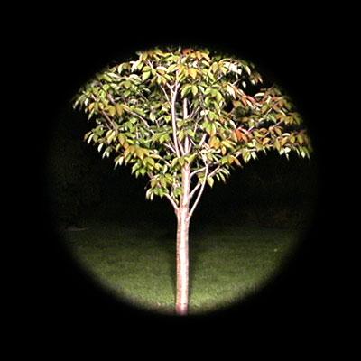 Tree-location#5.jpg