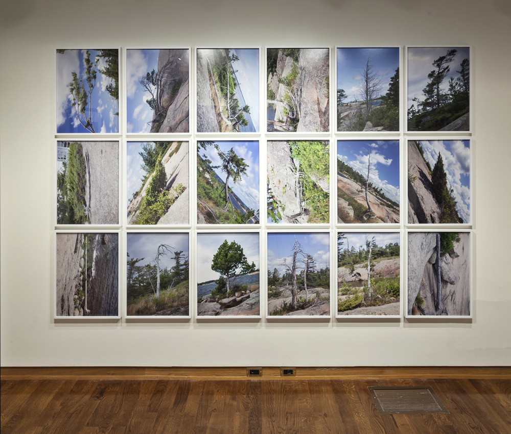 Tree Corrections, 18 Chromogenic Prints, 24 x 18 inches each, 2013