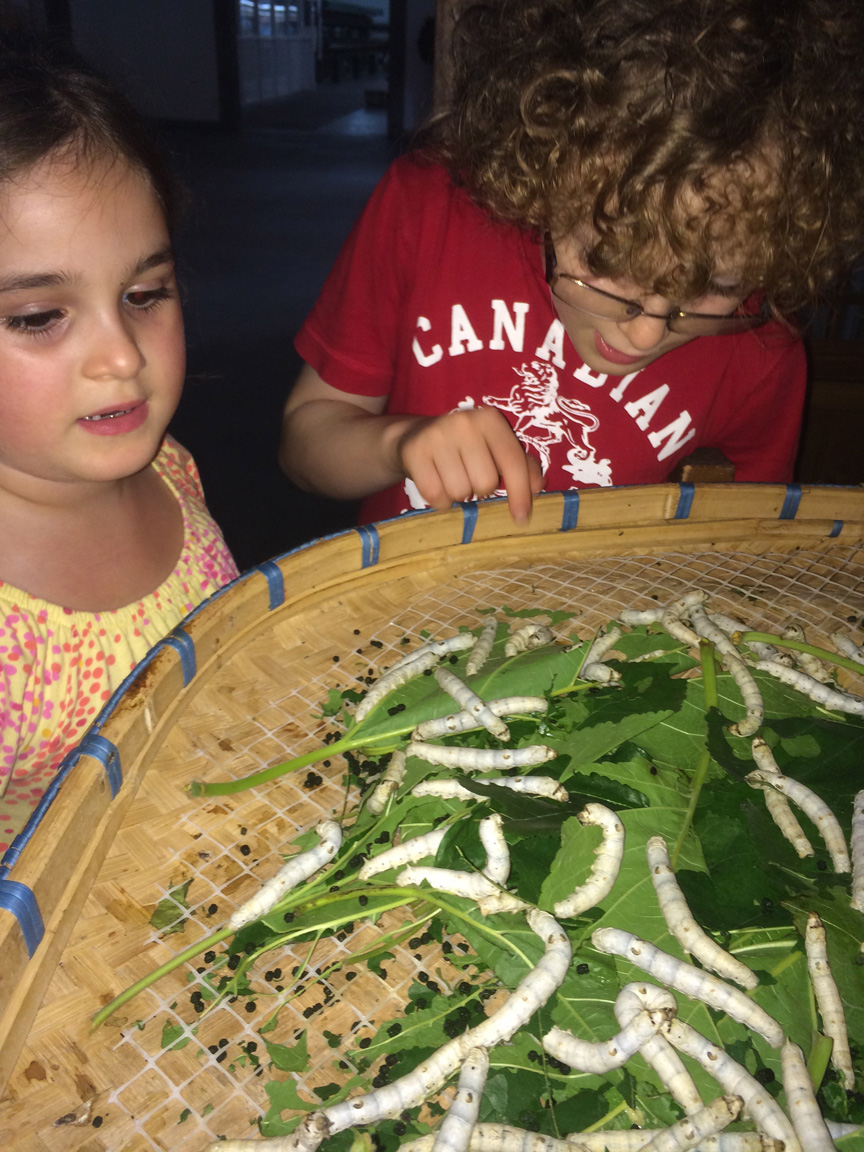 Lucy and Sam decide they'd like a Silkworm for a pet