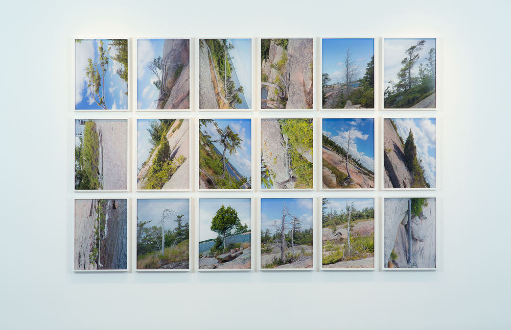 Tree Corrections, 2013, 18 Chromogenic Prints, 18x24 inches each