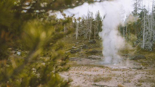 Forest geysers at the continental divide
