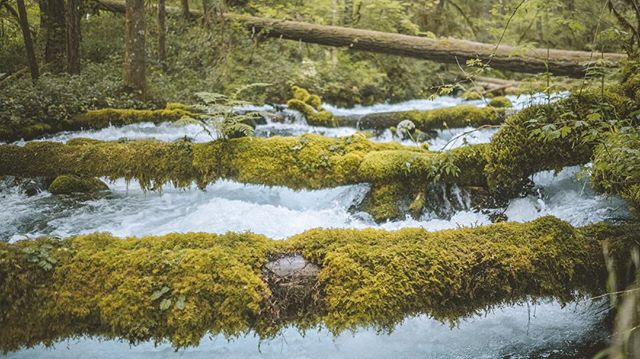 lush town down in the ancient volcanic streams of the cascades .. #cascades #oregon #lush