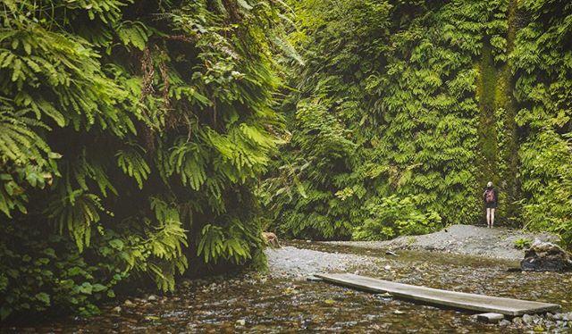 Fern gully af  #themillenialsilentspring? #whereishexxus? #amihexxus? #oramizak? #whydidtheymakeasequel? ........ #ferns #california #nature #prairiecreekredwoodsstatepark #hike
