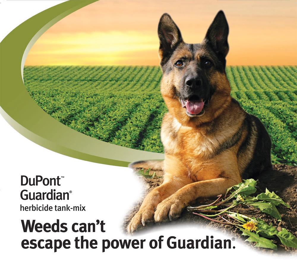 Guardian MEGA Ad.jpg