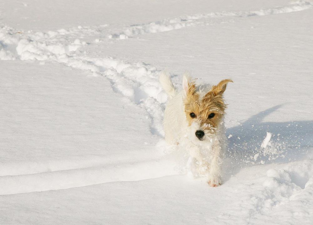 snow_3399.jpg