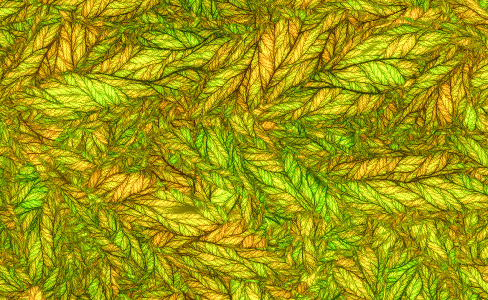 stained_glass_leaves.jpg