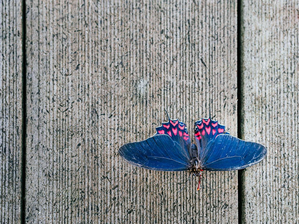 20131206_butterfly_pavillion_12093_.jpg