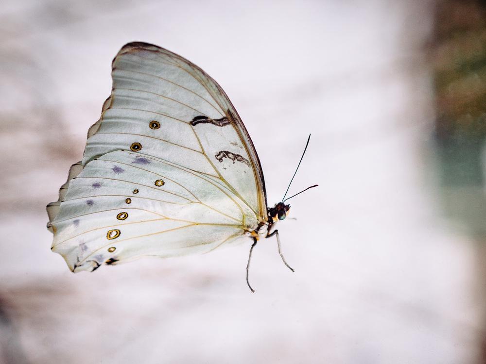 20131206_butterfly_pavillion_12097_.jpg