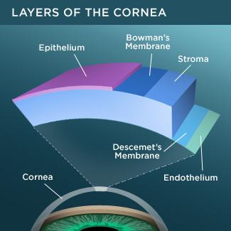 Corneal layers