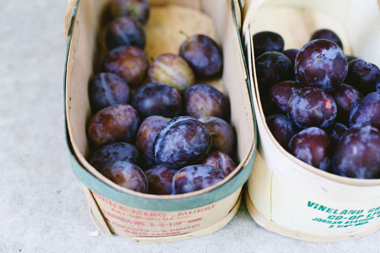 Black + German Plums by Tara O'Brady