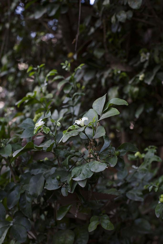 Halcyon Garden | Tara O'Brady
