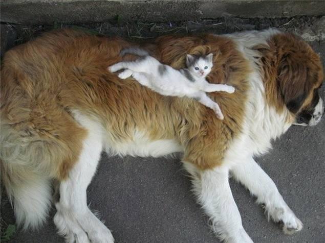 dogs-friends-12.jpg
