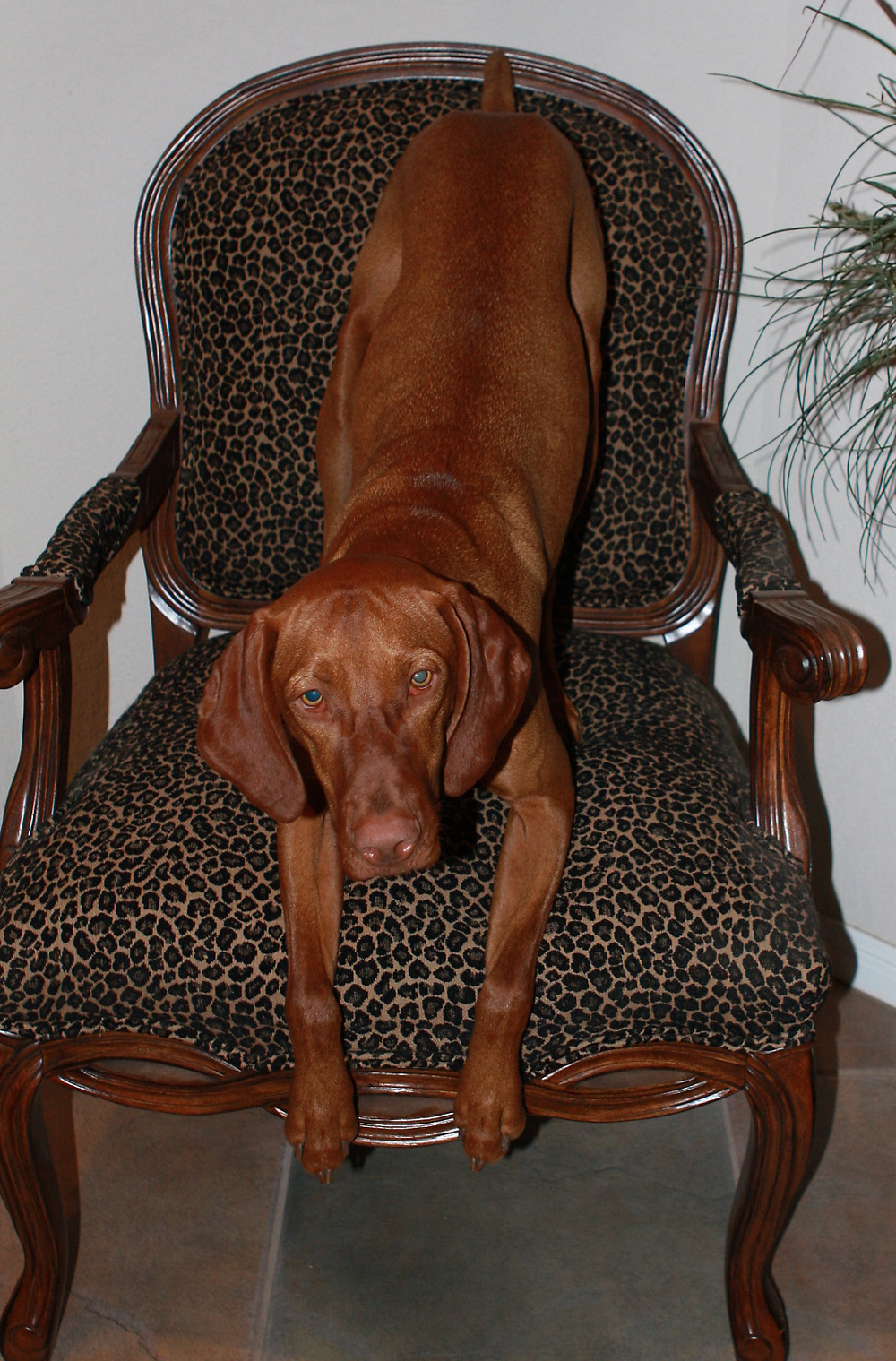 Tanner on Leopard Chair.jpg