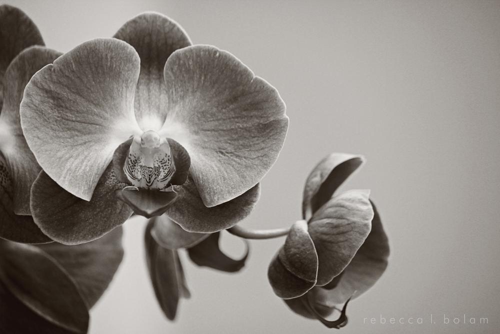 Orchid 2 b&w sm.jpg