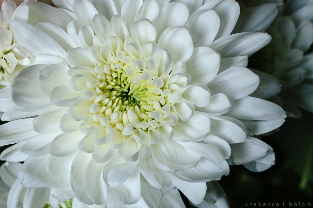 White Flower green center.jpg