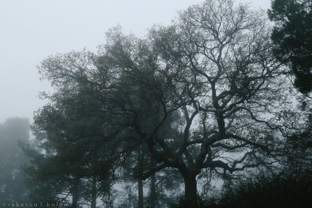 Buddys tree in the fog.jpg