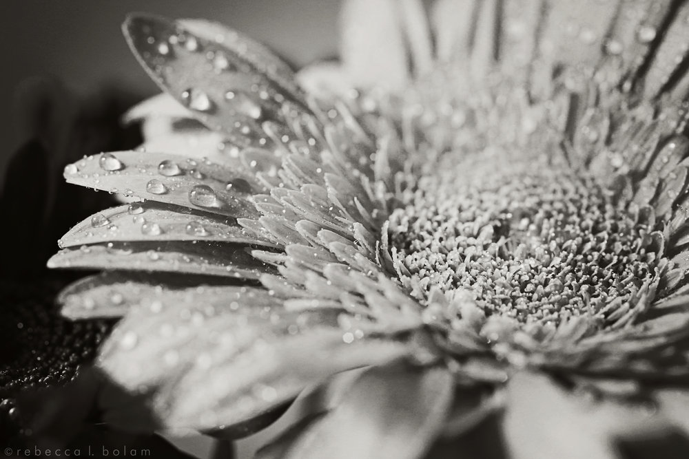 Yellow orange flower and water drops bw.jpg